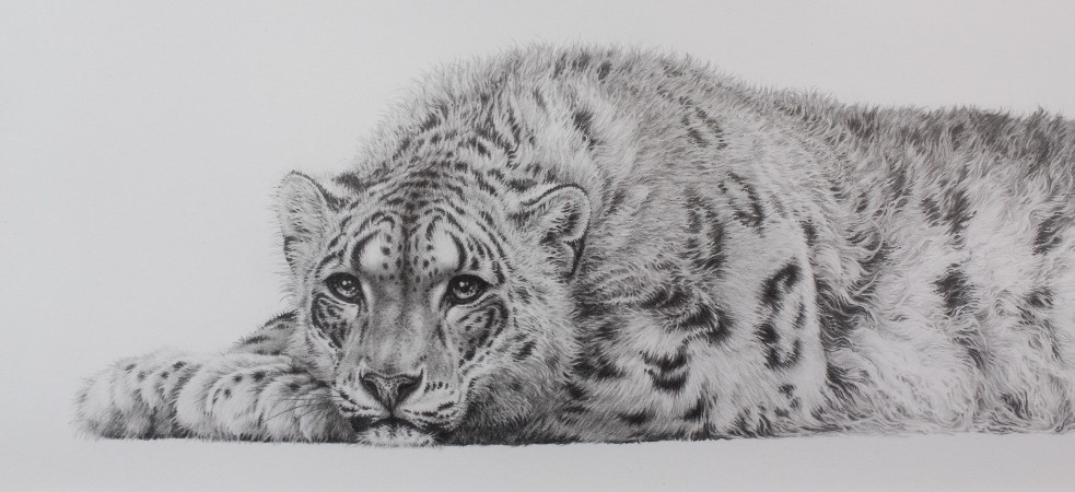 Lot-469-Gary-Hodges-Original-Drawing-The-Snow-Leopard-£5400
