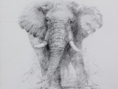 David-Shepherd-Original-Drawing-£1100